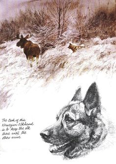 Norwegian Elkhound Vintage Dog art prints, Gifts and Artwork from ...