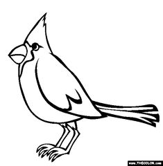 Cardinal Coloring Page Free Online