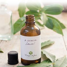 How to Make Laurel Oil at Home: Step-By-Step. Laurel oil is one of the most used essential oils in aromatherapy, particularly for its sedative, digestive and diuretic properties. Detox Kur, Esential Oils, Diy Spa, Medicinal Herbs, Beauty Recipe, Natural Cosmetics, Natural Medicine, Home Remedies, Natural Remedies