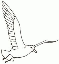 How to draw a seagull in flight, step-by-step. (Add to