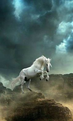 Spirited White Beauty !