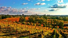 Sonoma Wine Country Vineyards in Autumn.