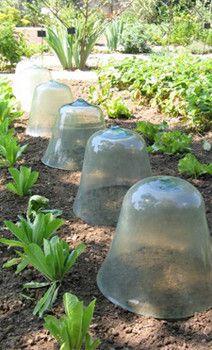 French Kitchen Garden Potager | Pictures - Potager - an European style organic kitchen garden ...