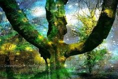 its magic- tree