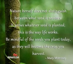 mother nature -