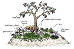 "Component plantings in a fruit tree guild create a ""miniature ecology"" in a plot as small as 8'square"