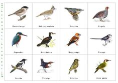 A Madárkertbe látogató vadmadarak Tree Day, Home Learning, Bird Illustration, Earth Day, Primary School, Activities For Kids, Birds, Education, Animals
