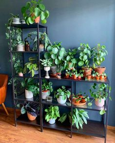 Indoor Plant Decor ideas are fun for people of all ages. You don't have to have a huge garden or your Indoor Plant Decor Ideas are perfect for small garden arrangements. There are many different plants that are suitable for… Continue Reading → Room With Plants, House Plants Decor, Decoration Plante, Green Life, Indoor Plants, Indoor Plant Shelves, Houseplants, Planting Flowers, Home And Garden