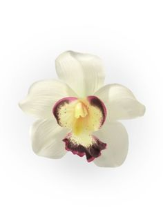 Ivory Orchid Pin Up Hair Clip Small