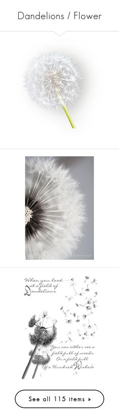 """""""Dandelions / Flower"""" by nikki-kersey ❤ liked on Polyvore featuring flowers, backgrounds, pictures, pics, dandelions, fillers, plants, decorations, embellishment and detail"""