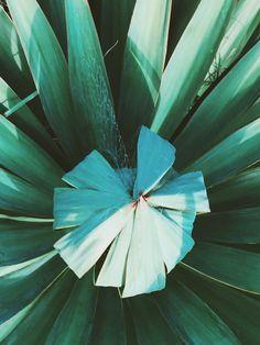 Color & texture Amanda, Plant Leaves, Landscapes, Texture, Flowers, Plants, Inspiration, Color, Art
