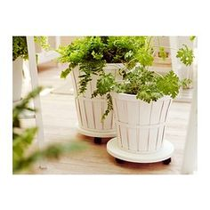 LANTLIV Plant stand on wheels IKEA The plant stand on wheels raises the plant and protects the floor from moisture and scratches.