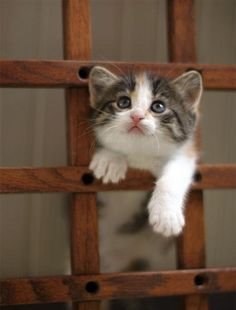 cute foster calico kitten climbs frame