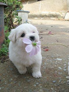i bringing u a flower
