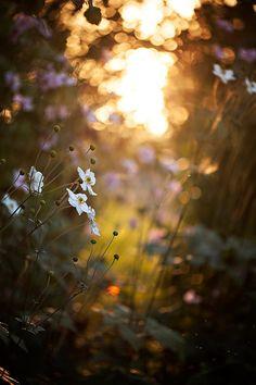 .petite flowers along walk