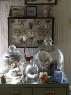 Glass domes, still life