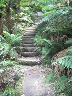 The Giant's Staircase, Blue Mountains Australia Sydney Tourist Attractions, Places To Travel, Places To See, Melbourne Trip, Blue Mountains Australia, Sense Of Place, Day Tours, Australia Travel, Places