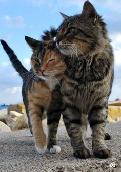 enchantedengland says: 'Affectionate cats and kittens should always be posted honestly they should. Although that smaller one is sort of a teenager cat I think. Its a kitcat or a catten or a catenager or something like that.' uncredited photo