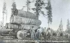 Undated photo of loggers in California