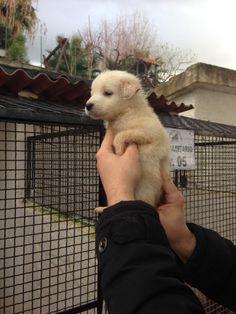 Cuccioli in canile: 2 piccoli già adottati!. Maschietto di 60 gg.  Condividete  in tanti al fine di sistemarli tutti!!! Grazie!  InfoLine: 3288160015 (Paola) Ps: ricordo che i cuccioli verranno consegnati con primo vaccino e microchip.