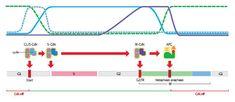 Biology Art, Line Chart, Diagram