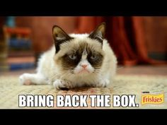 """Grumpy Cat Stars in Friskies Cat Game Show, """"Will Kitty Play With It?"""""""