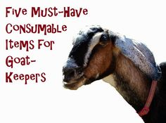 Oak Hill Homestead: Five Must-Have Consumable Items for Goat-Keepers - what you need to have on hand if you have goats!