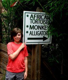 So much to see! @Harmony Mauzey Safari Park