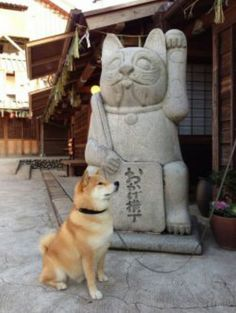 Shiba Inu :D    For more check out ICanHazAwws