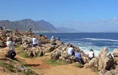 Hermanus, Afrique du Sud