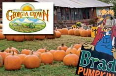 Bradley's Pumpkin Patch in Dawsonville, Georgia.