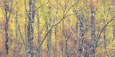 Golden Tapestry Photographic Print by Doug Chinnery at Art.com