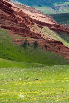 Balsamroot wildflowers bloom below a sandstone hill along the Chief Joseph Highway in northwestern Wyoming.
