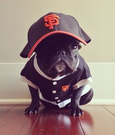 8d6028c93937 trotter pup baseball dog pictures Cute French Bulldog, French Bulldog  Puppies, French Bulldogs,