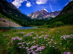 During the summer, the alpine wilderness explodes with brightly colored blooms, and these epic wildflower hikes near Denver are truly out of this world!