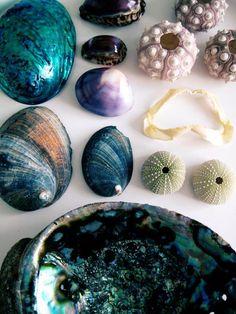Shells: via Happy Mundane