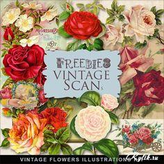 Нарисованные винтажные розы