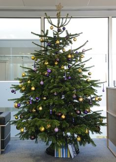 Real Christmas Trees Decorated.51 Best Real Christmas Trees Images In 2018