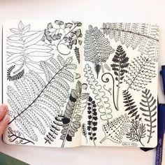 Ferns, doodle line drawing