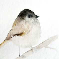 aquarel bird