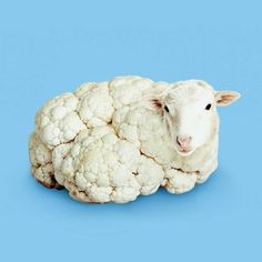 sheep / cauliflower / digital art / photoshop illustration / blue and white Photomontage, Photo Illusion, Creative Photography, Art Photography, Funny Animals, Cute Animals, Poesia Visual, Visual Puns, Surreal Artwork