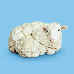 sheep / cauliflower / digital art / photoshop illustration / blue and white Photomontage, Photo Illusion, Creative Photography, Art Photography, Exposure Photography, Levitation Photography, Visual Puns, Surreal Artwork, Surrealism Photography