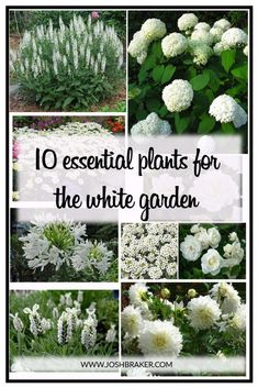 Top 10 Essential Plants For The White Garden. A great handy guide for selecting . Top 10 Essential Plants For The White Garden. A great handy guide for selecting the best white flowering plants for your garden White Gardens, Small Gardens, Outdoor Gardens, Outdoor Plants, Front Gardens, Modern Gardens, White Flowering Plants, White Plants, Green Plants
