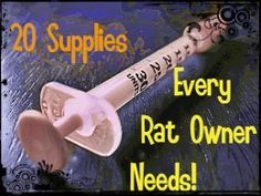 All of these supplies are very important for new and seasoned rat owners. Syringes, for example, can be used to nurse orphaned and abandoned rat kits.