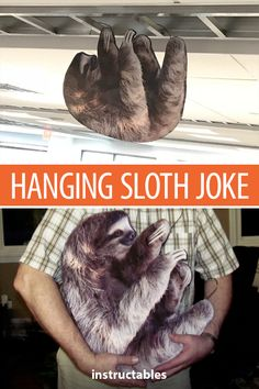 Saul the Sloth - 'Hanging Humor' - April Fool's - Pranks Paint Stir Sticks, April Fools Pranks, Tape Painting, The White Stripes, Mirror Image, Best Location, How To Make Paper, Sloth, The Fool