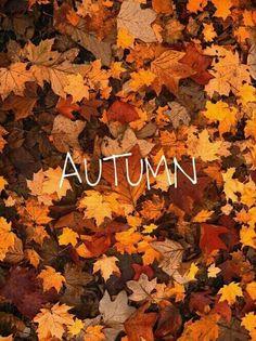 Crisp Air & Falling Leaves