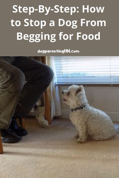 Before you even sit in your chair, your dog is there begging for food. That's not something I ever tolerate, but if it's happening to you here's what to do about it. #dogbeggingforfood #dogbehavior Pet Sitters International, Pet Wolf, Group Of Dogs, Dog Health Care, Cute Dog Pictures, Dog Shower, Pet Costumes, Dog Accessories, Dog Care