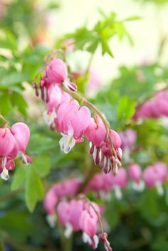 Frühlings-Gartenzauber