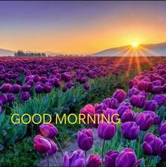 Good Morning Tuesday, Good Morning Messages, Good Morning Good Night, Good Morning Wishes, Saturday Greetings, Morning Greetings Quotes, Happy Saturday, Good Morning Inspirational Quotes, Good Morning Quotes