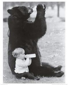 'Copy Cat' - Cute Baby copying the Big Mama Grizzly Bear